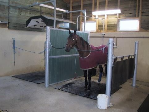 Stalle douche/ préparation chevaux